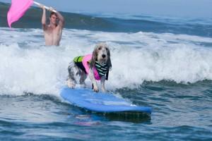 Pawl Surf