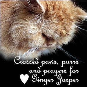 Ginger Jasper