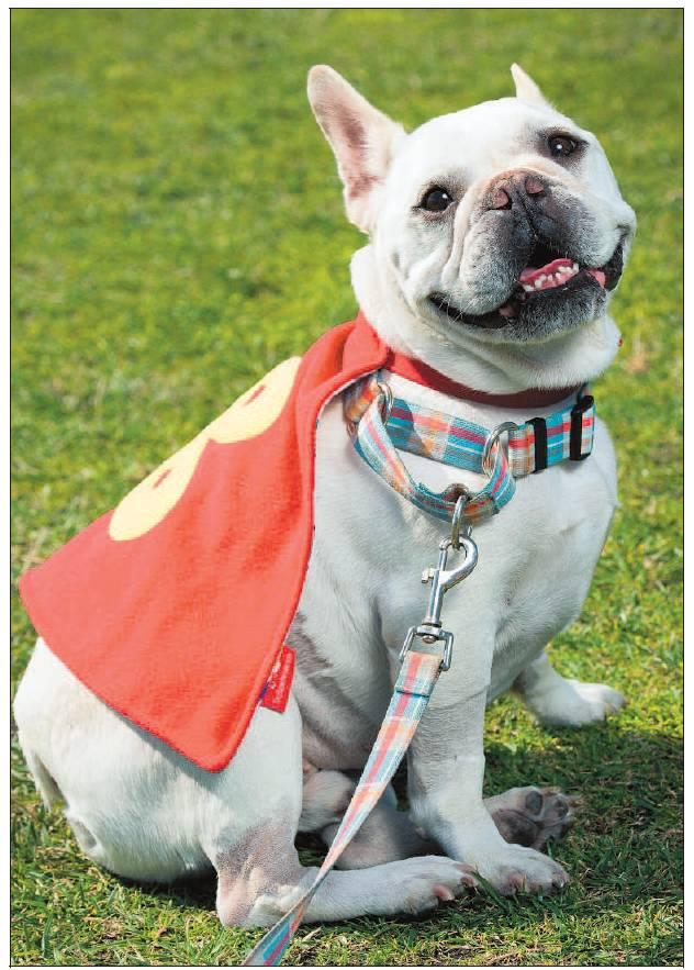 benny cape