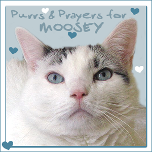 Purrs for MOOSEY