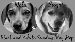 Black-and-White-Sunday-Badge1